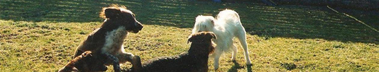 Hundesitterparadiesli